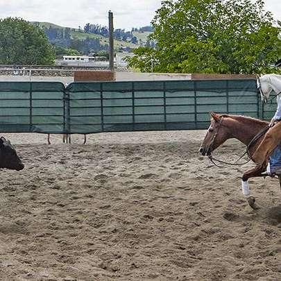 Parsons Performance Horses. John Parsons Owner