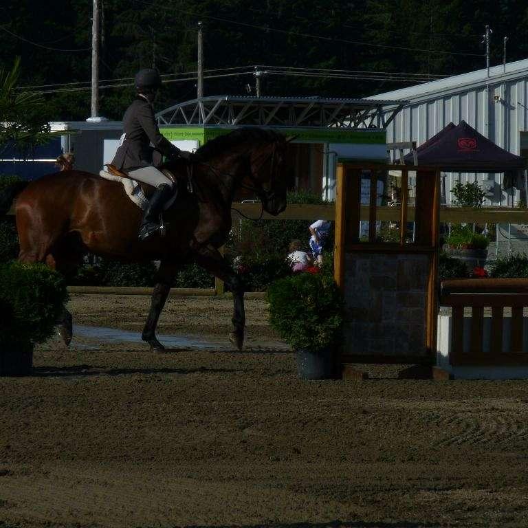 Petreman Equestrian
