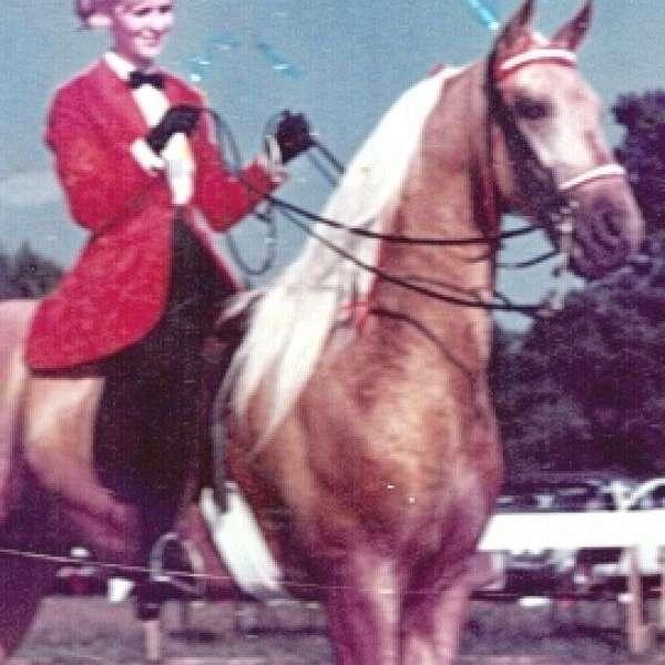 Sallyes Horses