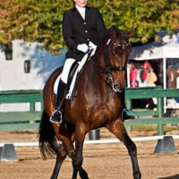 Equiterra Sport Horse