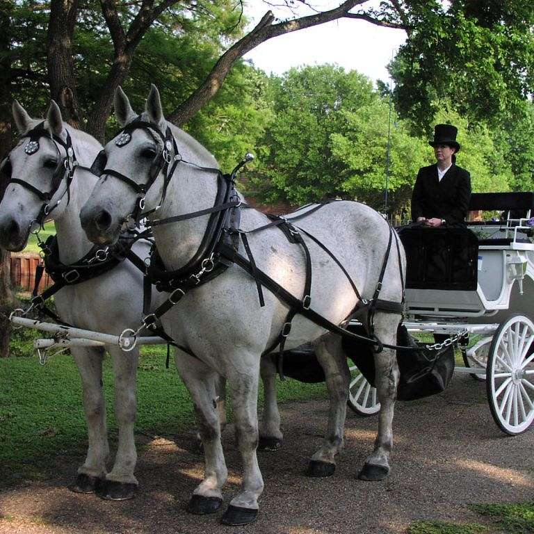 Star Buck Carriage