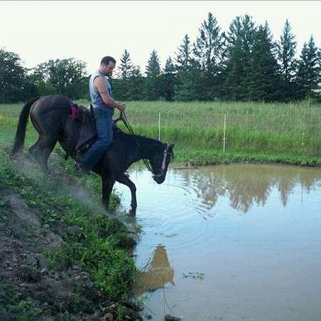 JLS Horse Training
