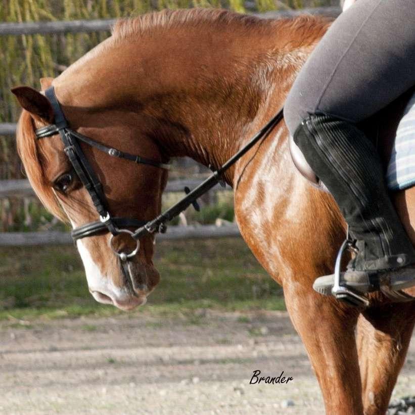 Anderson Equestrian