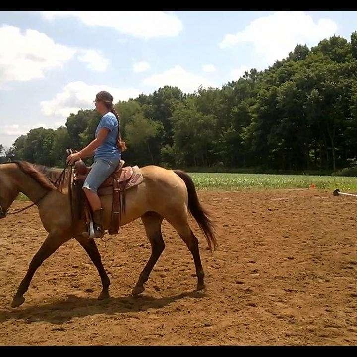 RW Quality Started Horses