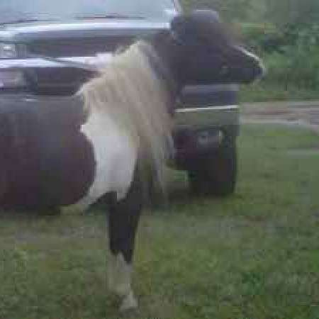 from horses to minis