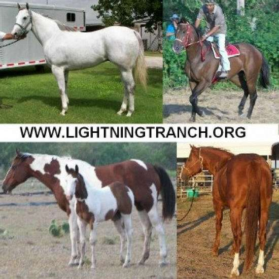 LightningT Ranch