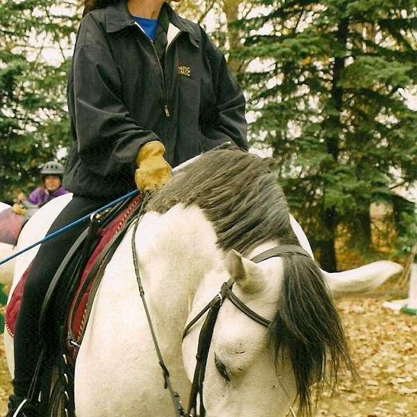 Emerald Equestrian