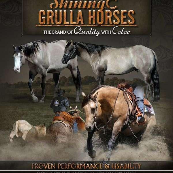 Shining C Grulla Horses