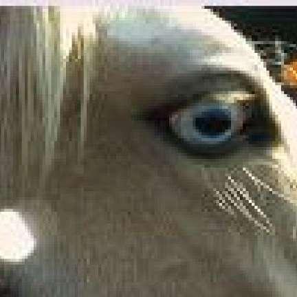 StarDutch Equine