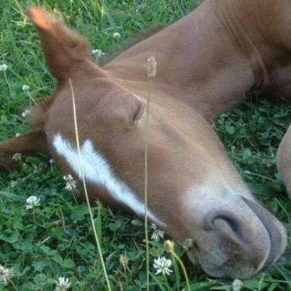 PeacePipe Quarter Horses