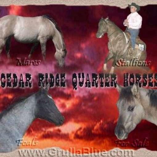 Cedar Ridge QH's