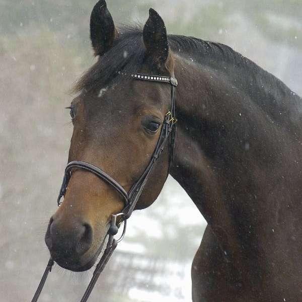 Euro Equestrian Sales Ltd.