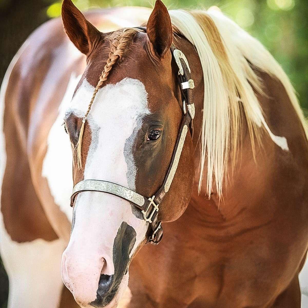 K & S Show Horses