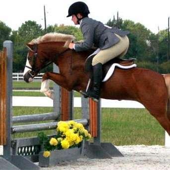 South Shore Sport Horses