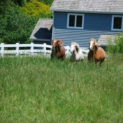 Meadowsweet Ranch