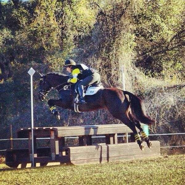 Infinity Sport Horse LLC