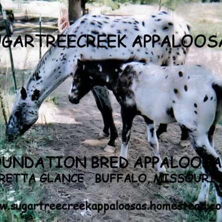Sugartree Creek Appaloosas