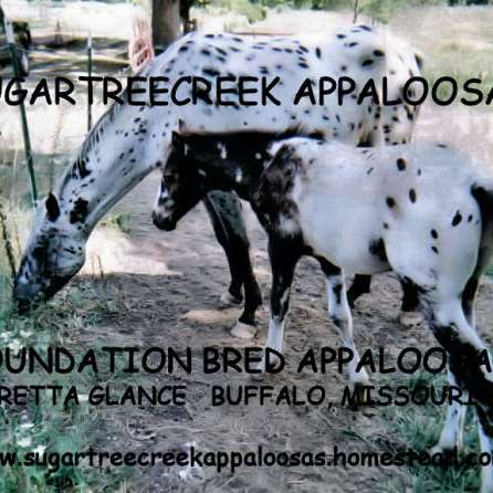 Sugartree Creek Appaloosas