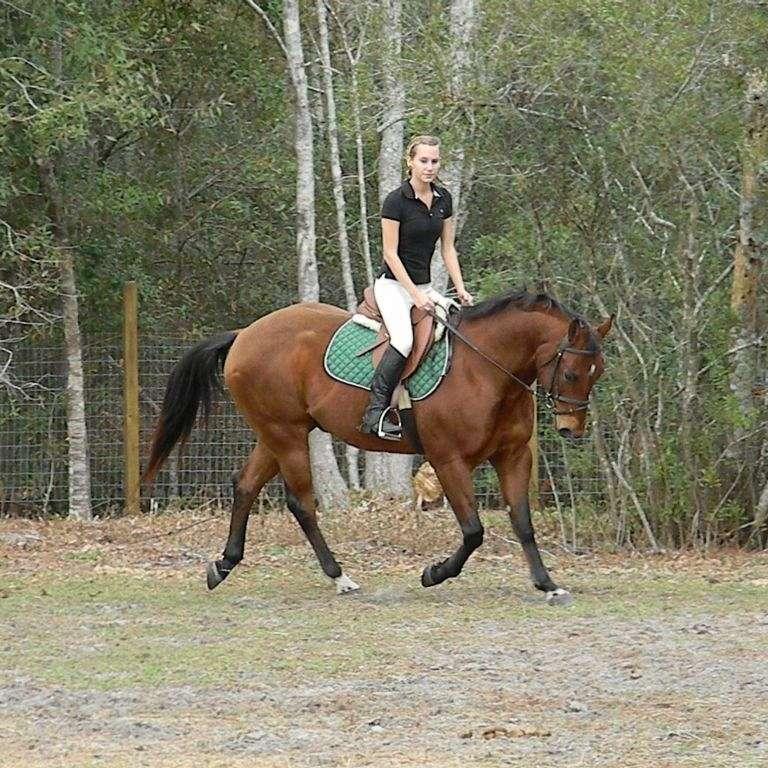 Saddle Up Riding Club