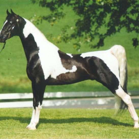 AM Natural Horsemanship