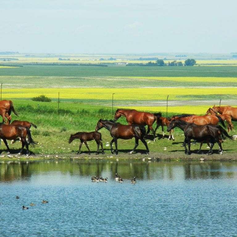 Yankee Valley Sport Horses