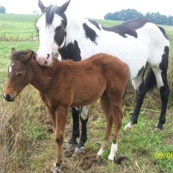 Society for Hooved Animals Rescue and Emergency