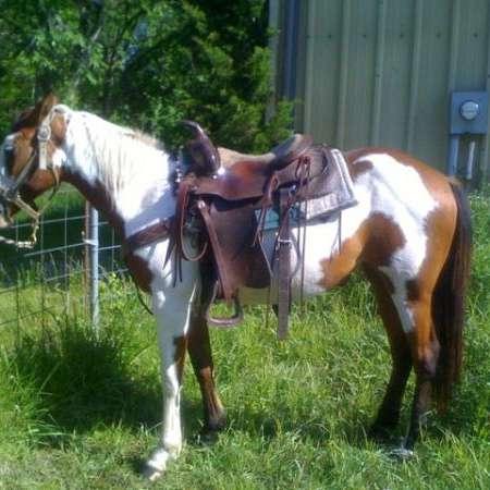 Shoultz Horses and Training