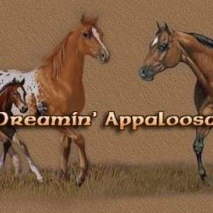 dun dreamin appaloosa ranch