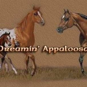 dun dreamin appaloosa ranch