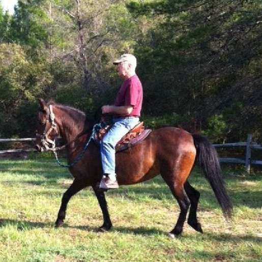 Ken's Paso Fino Horses