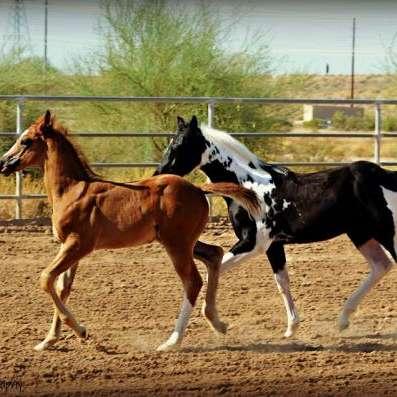 Royal J Performance Horses