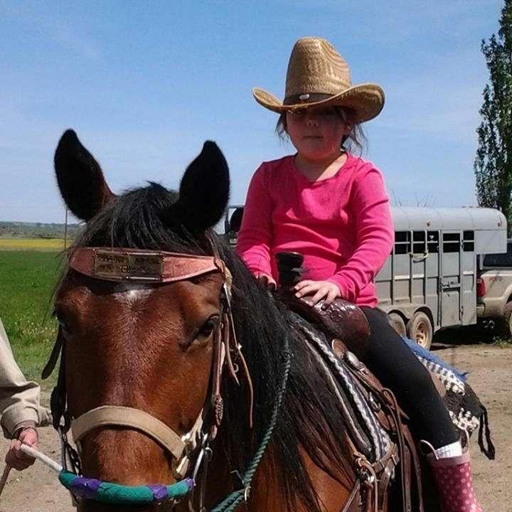 Johnston Quarter Horses