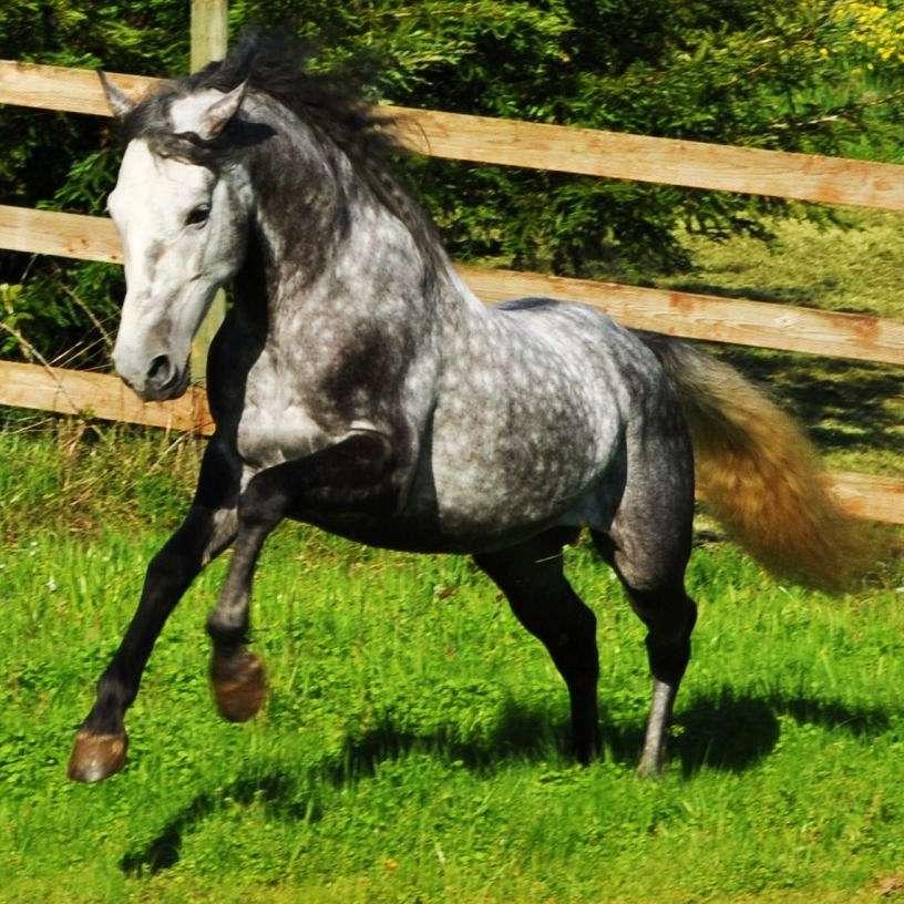 JR Horse Training