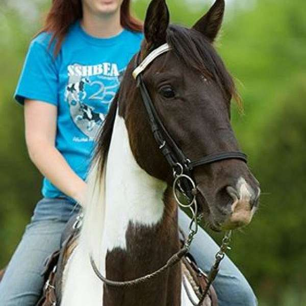 Knox Equine Services