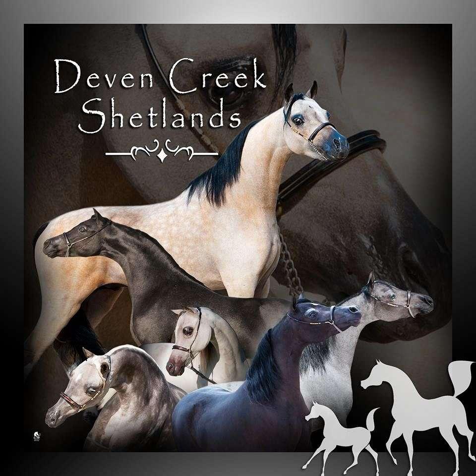 Deven Creek  Shetlands