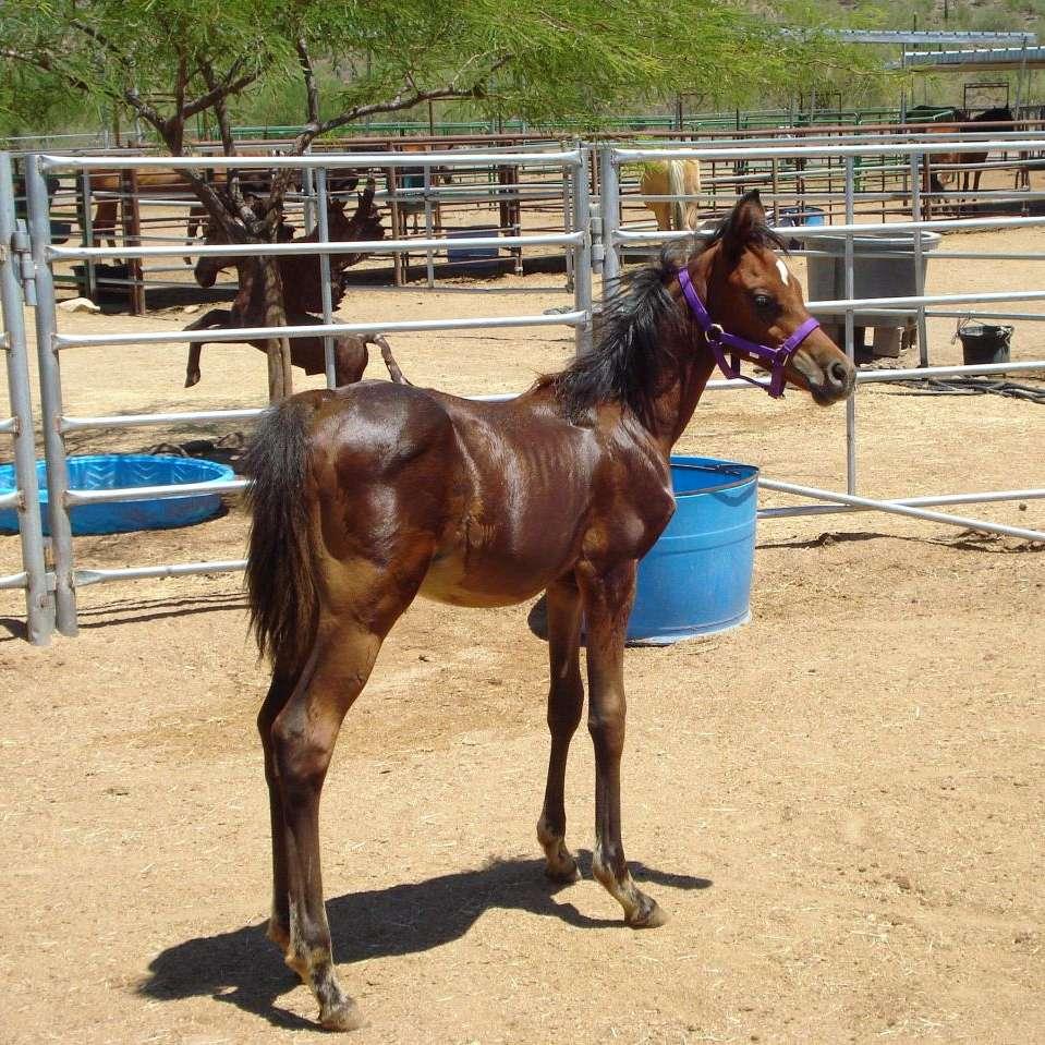 Dreamchaser Horse Rescue  Rehabilitation Inc.