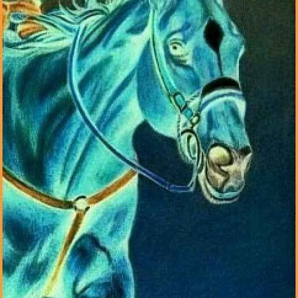 Owens Performance Horses