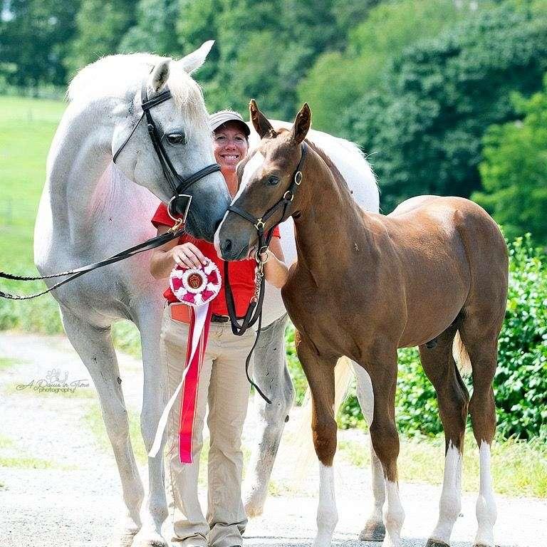 Flying Change Performance Horses & Ponies