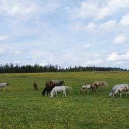 Colour V Ranch
