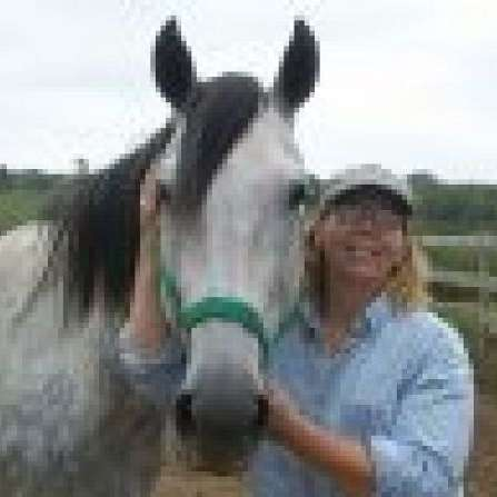 Horseserenity Equine Massage Therapy