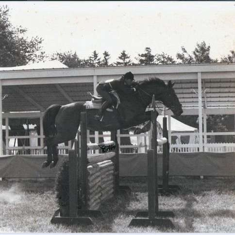 EQUITREND SPORT HORSES