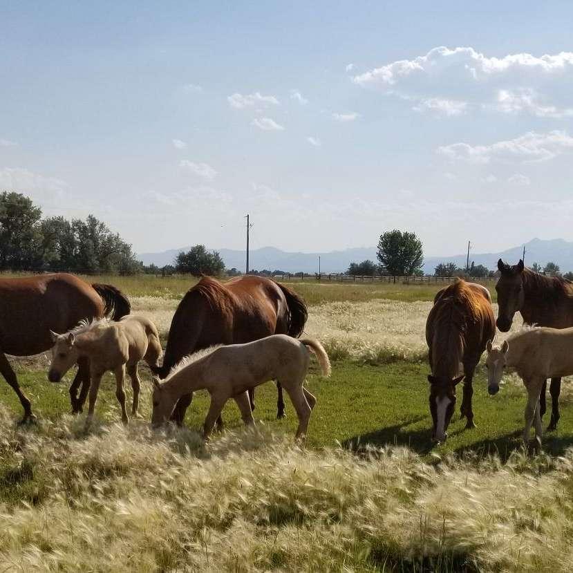 Triple Diamond Horses