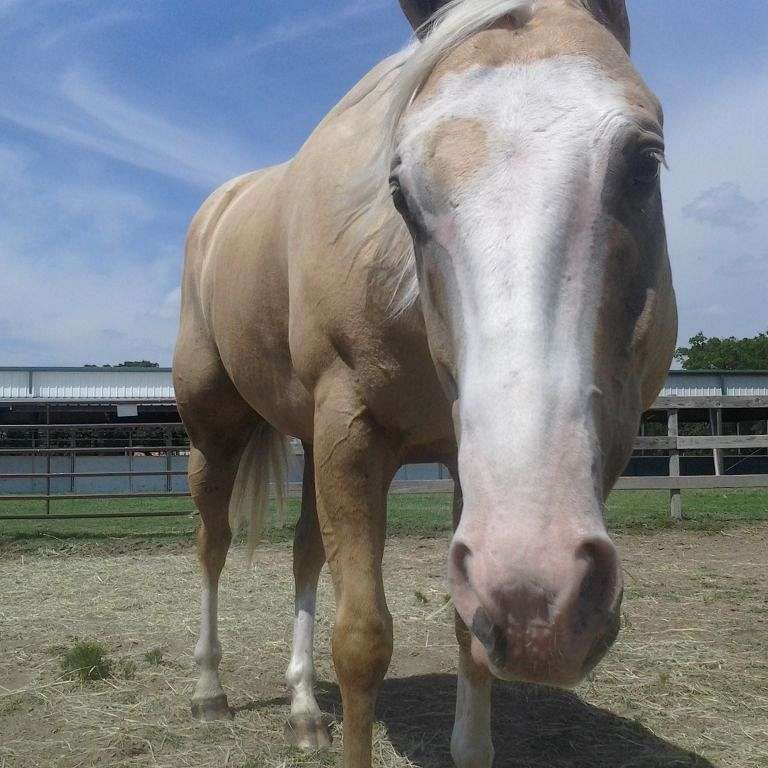 Luce Reins Training- Horse Training and Lessons