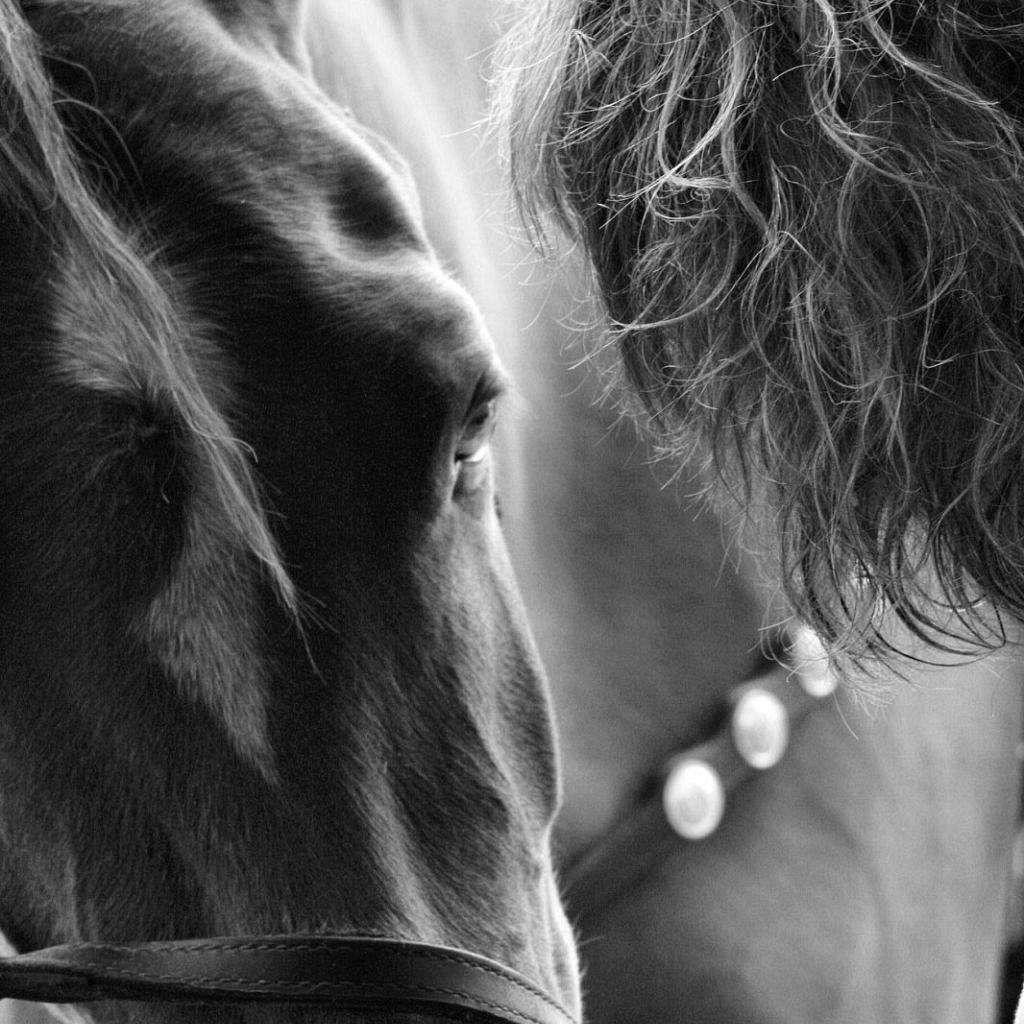 Coffey Stables - Offering Well broke Gentle horses