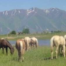 JMB Ranch