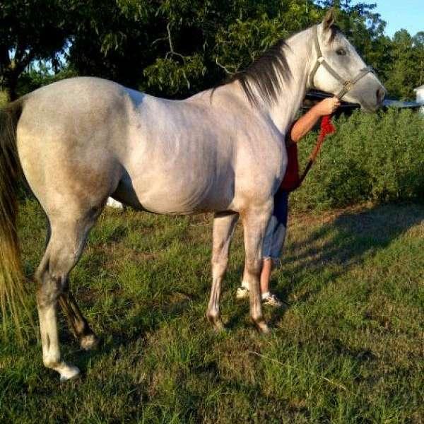 GNW Quarter Horses