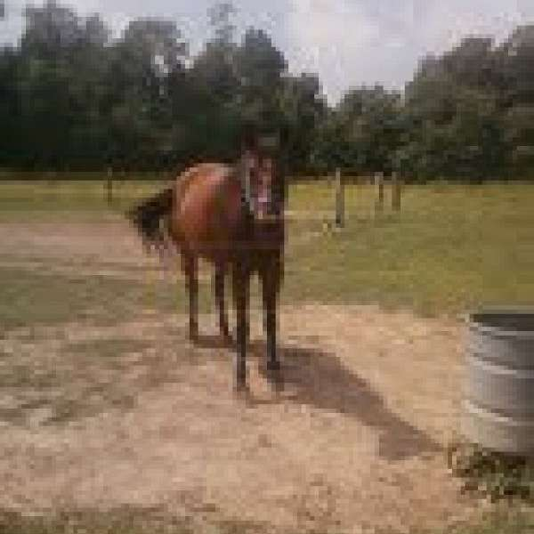 Harris Barrel Horses