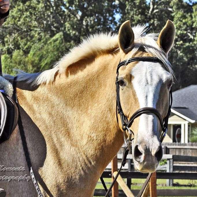 Horse Haven Farm, LLC