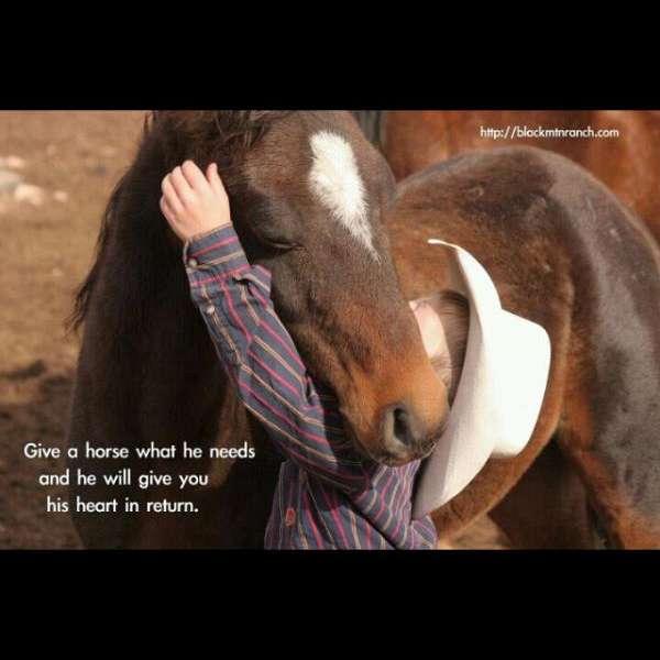 AW Horses