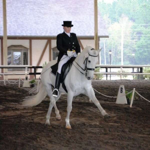 HWalters Dressage and Luna Bella Andalusians